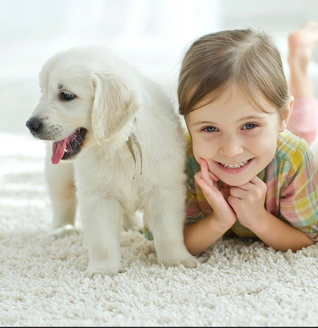Dog and Child on Clean Carpet